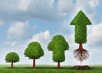 Investment success as a business concept for growing wealth as a small tree  gradually turning into a mature flying arrow plant as a financial metaphor for a successful investing strategy.